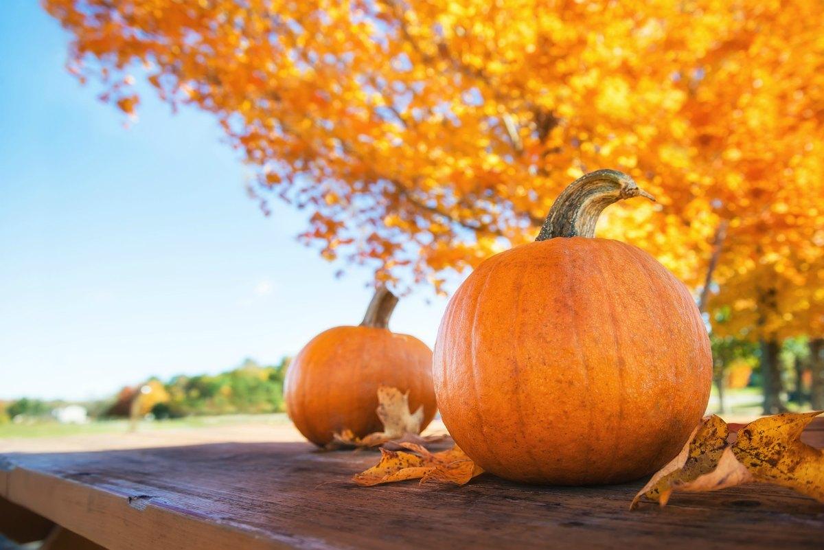 październikowe polecenia